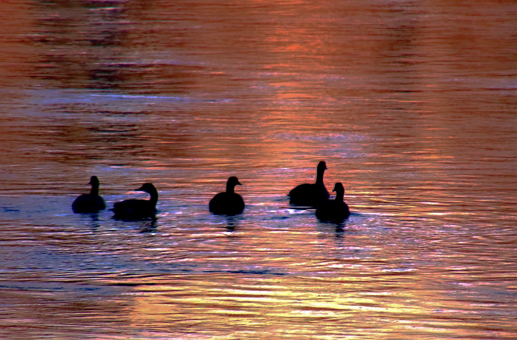 Sunrise Swim by lynnz