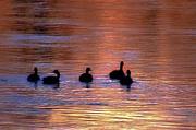 26th Feb 2020 - Sunrise Swim