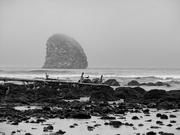 27th Feb 2020 - Olympic National Park