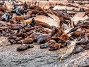 28th Feb 2020 - Seals lazing around