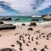 Penguins at Boulders by ludwigsdiana