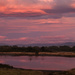Pale pink sunrise over the Ashley River estuary