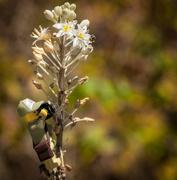27th Feb 2020 - (Day 14) - Bee Observant