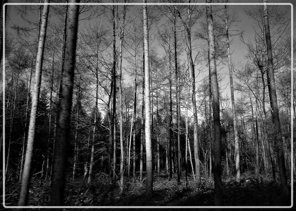 Into the woods by beryl