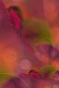 28th Feb 2020 - Abstract blur...........