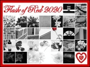 29th Feb 2020 - Flash of Red complete