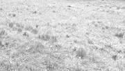 28th Feb 2020 - field of crocus