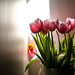 Tulips in a sliver of sun