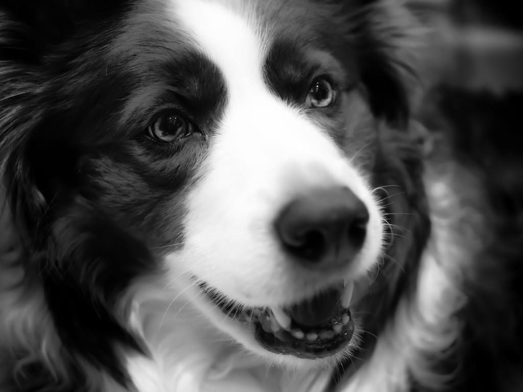 dog! by northy