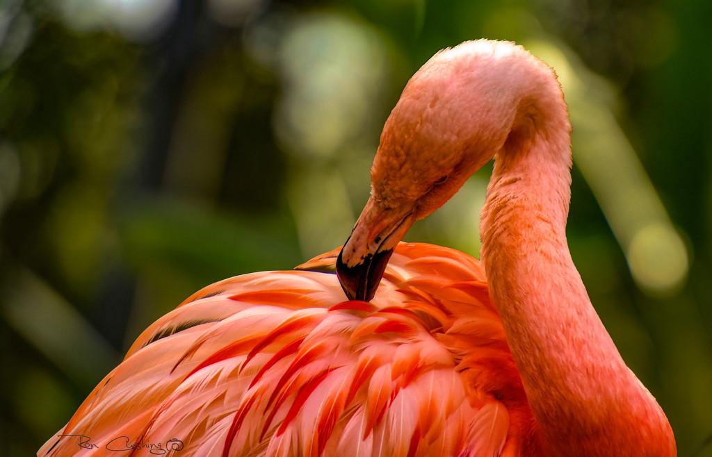 Flamingo Friday '20 08 by stray_shooter