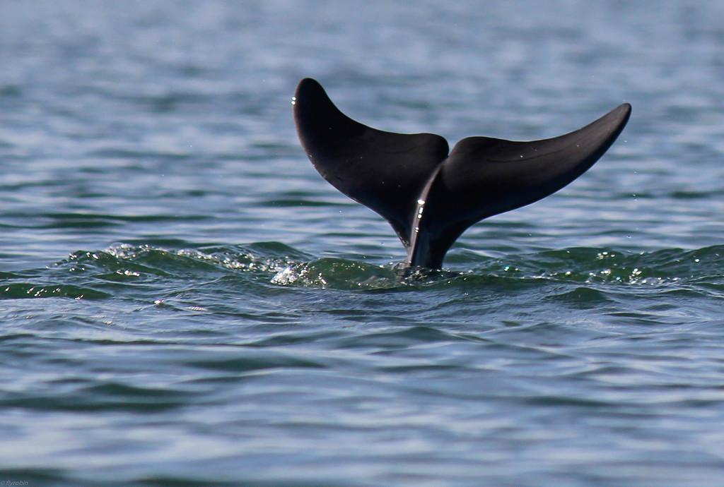 Dolphin fun by flyrobin