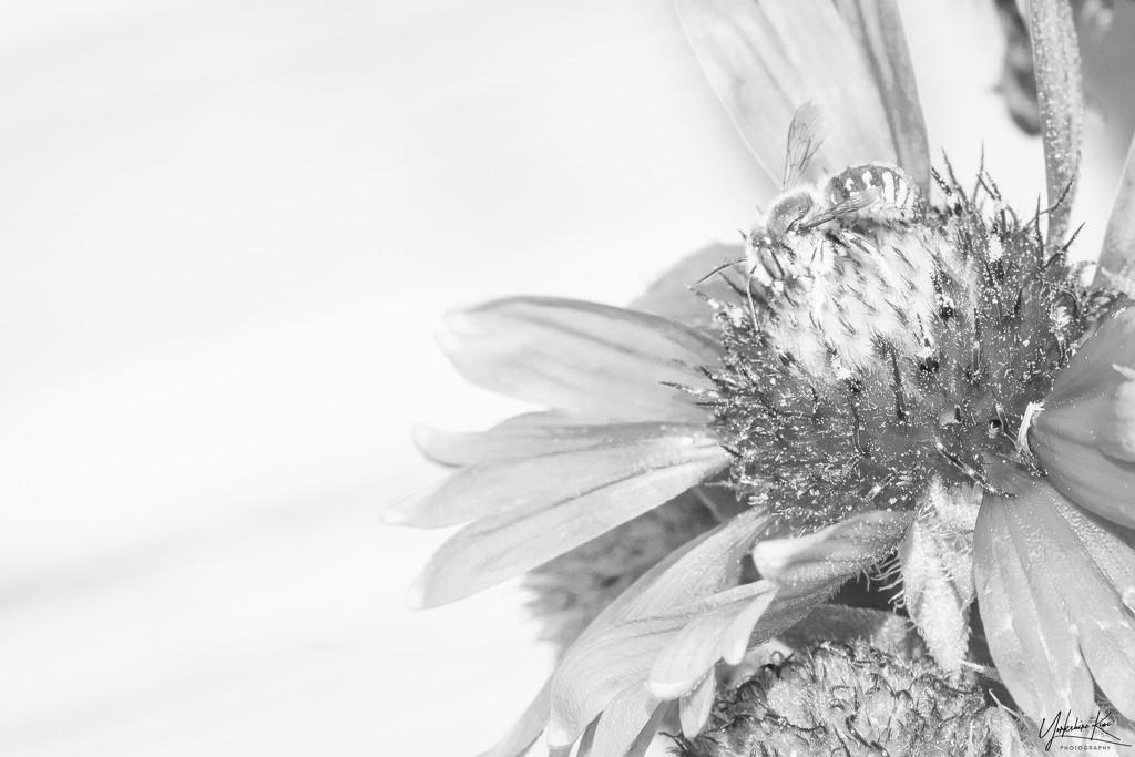 High key bee by yorkshirekiwi