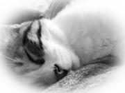 29th Feb 2020 - High key kitty cat