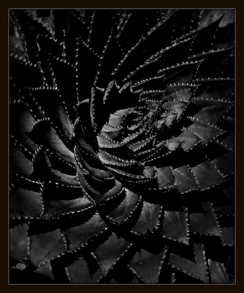Low key cacti by judithdeacon