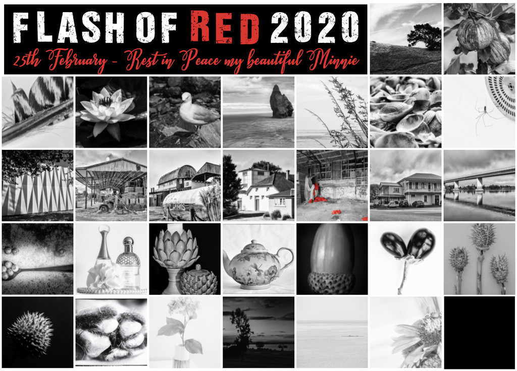Flash of red 2020 by yorkshirekiwi