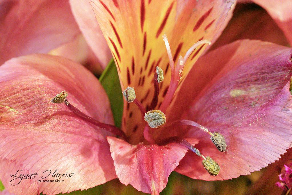 Macro Beauty by lynne5477