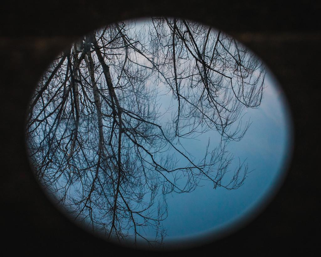 moon tree by mamazuzi