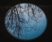 27th Feb 2020 - moon tree