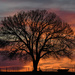 A Magnificent Tree by kareenking