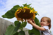 29th Feb 2020 - What a BIG flower you have!
