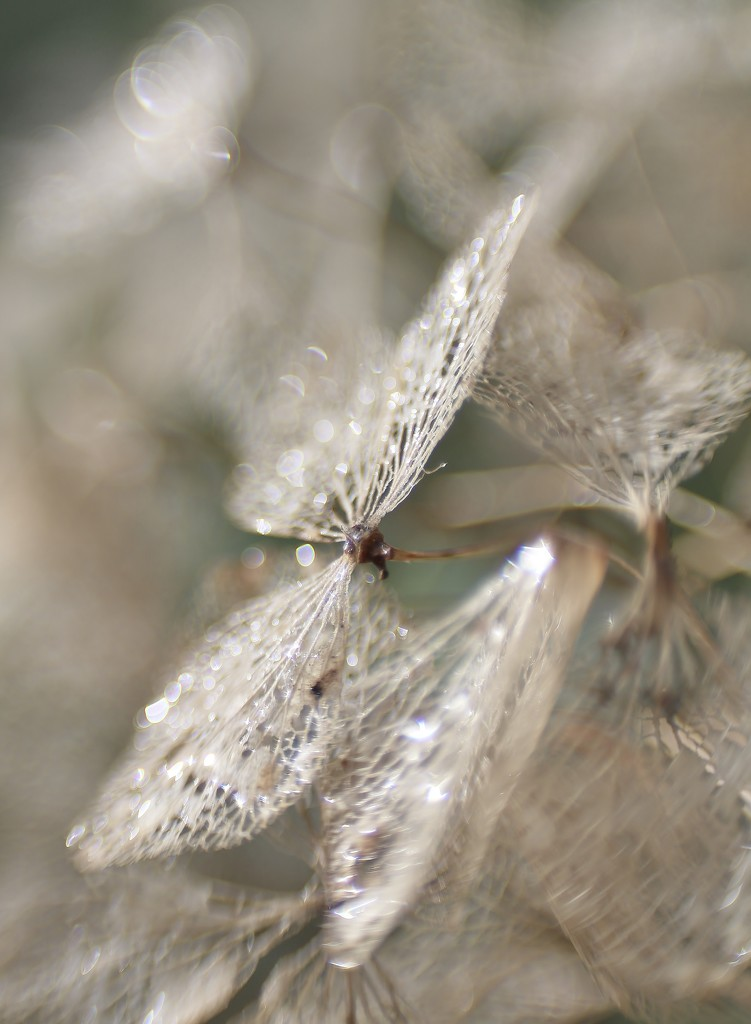 March Sparkle ...... (For Me Album) by motherjane