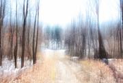 28th Feb 2020 - Cold Fire Trail