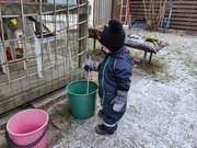 22nd Jan 2020 - Sisu is stirring water in the bucket.