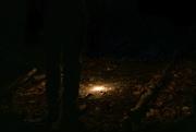 1st Mar 2020 - Night Hike