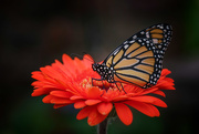2nd Mar 2020 - New Butterfly