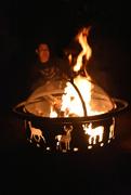 1st Mar 2020 - Fire Animals