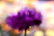 2nd Mar 2020 - purple fuzz