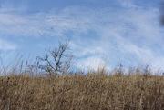 2nd Mar 2020 - prairie sky