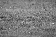 27th Feb 2020 - grass bird