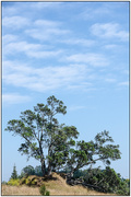 1st Feb 2020 - Te Puna Tree