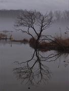3rd Mar 2020 - Beautiful Foggy Morning at the Lagoon