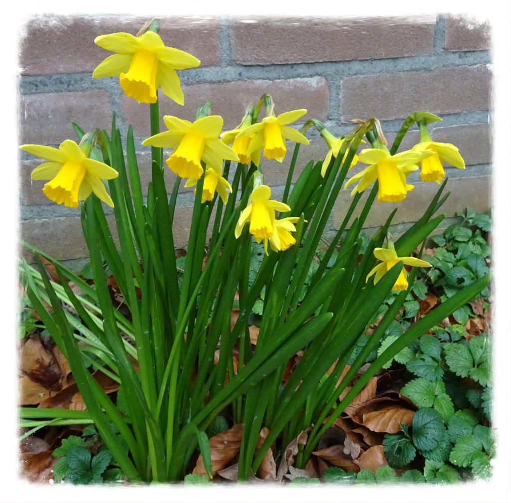 spring flowers by gijsje