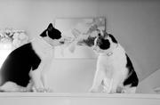 28th Feb 2020 - Cat Spat
