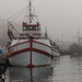 Misty by seacreature