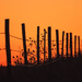 fenceline at sunset by aecasey