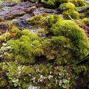 4th Mar 2020 - Florescent Green