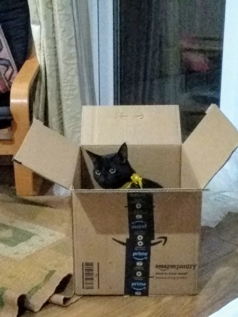 The Cat in the Box by snowy