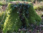 2nd Mar 2020 - Tree stump