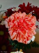 4th Mar 2020 - Carnation