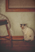 4th Mar 2020 - old world cat...