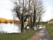 29th Feb 2020 - Iremongers Pond
