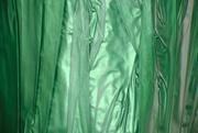 5th Mar 2020 - Green Foil - Rainbow2020