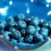 BLUE berries  by sugarmuser
