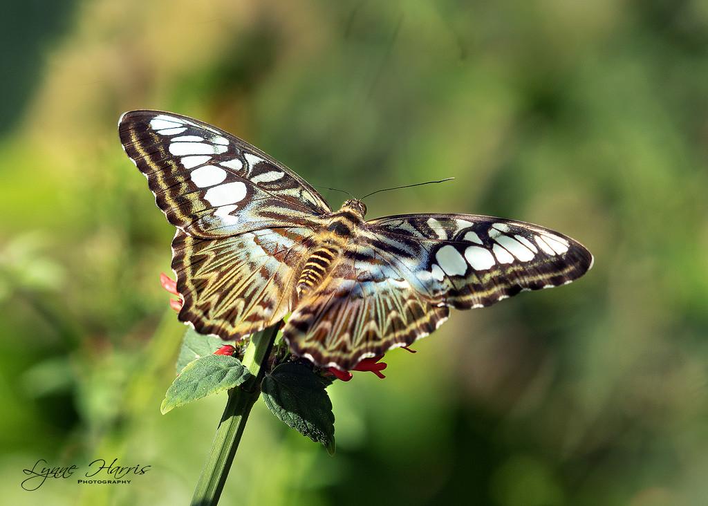Butterflies in the Garden by lynne5477