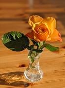 4th Mar 2020 - Rose