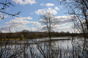 6th Mar 2020 - River Cam Floodplain